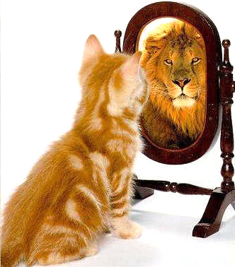 kitten_lion_mirror