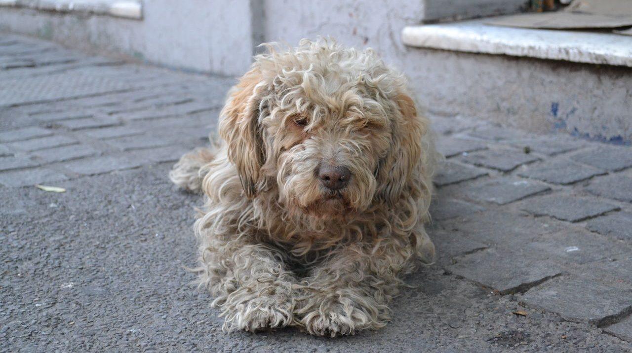 Het verhaal van de vieze maar wijze hond