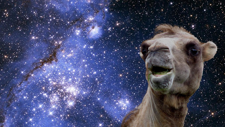 Het verhaal van de kameel, de os en de ram