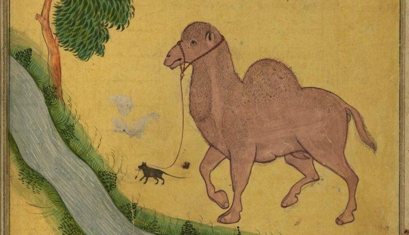 De parabel van de muis en de kameel