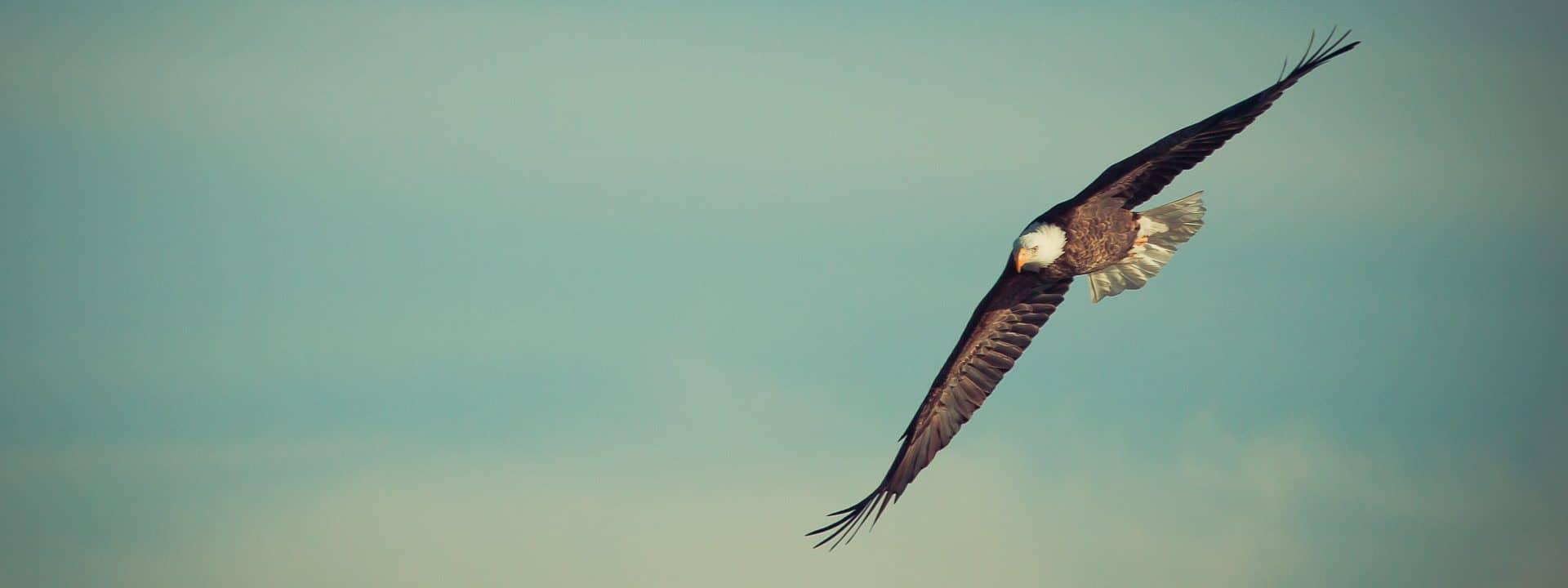 Ik zou graag een vogel willen zijn 2