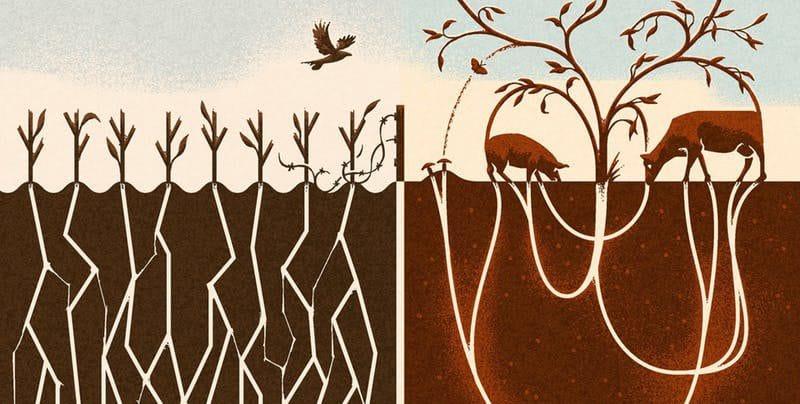 Wat is het belang van vegetarisch eten voor de spirituele ontwikkeling?