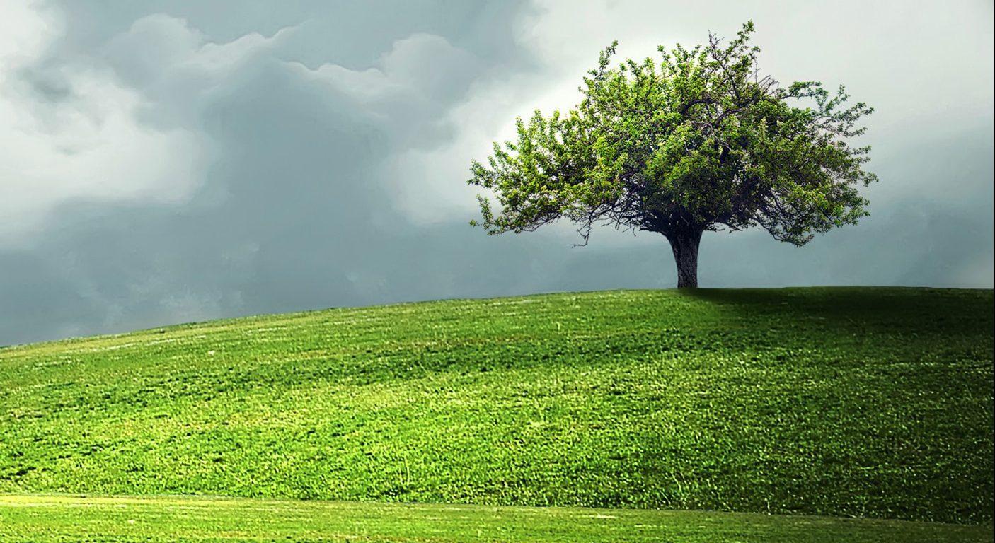 De mystieke metafoor van de boom