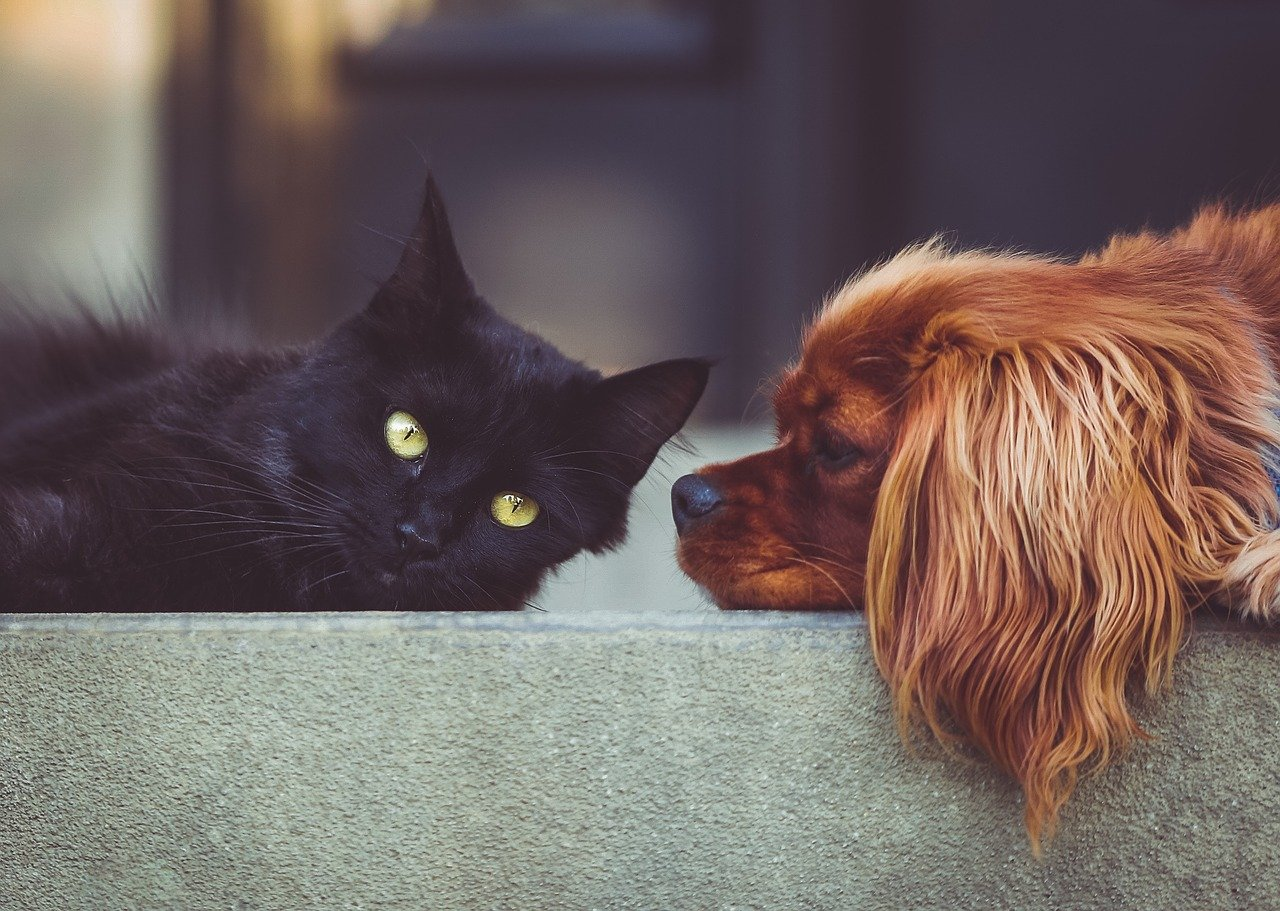 Vrijmetselarij en huisdieren